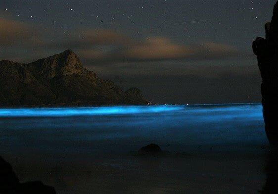 Bioluminescencja - świecąca plaża (niesamowite widoki nocą)