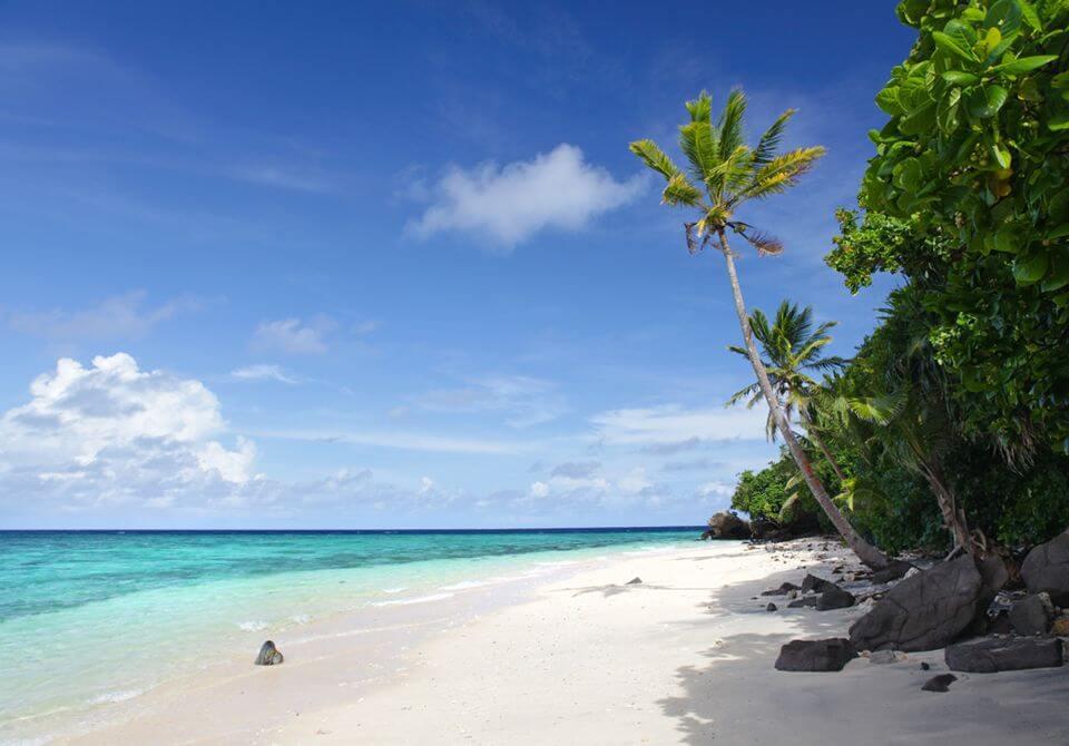 Fidżi - Royal Davui Island, plaża palmy