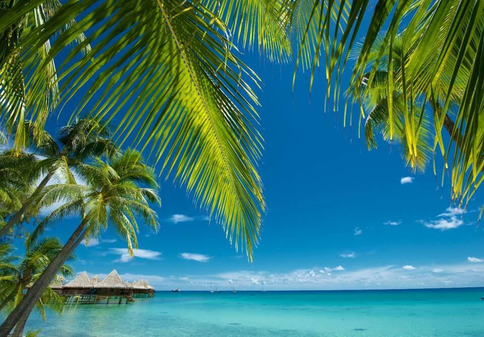 Polinezja Francuska, Rangiroa - KiaOra Resort, palmy