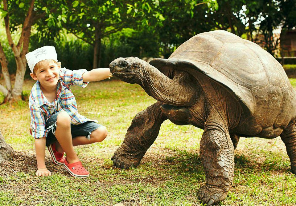 spotkanie z żółwiem o imieniu James