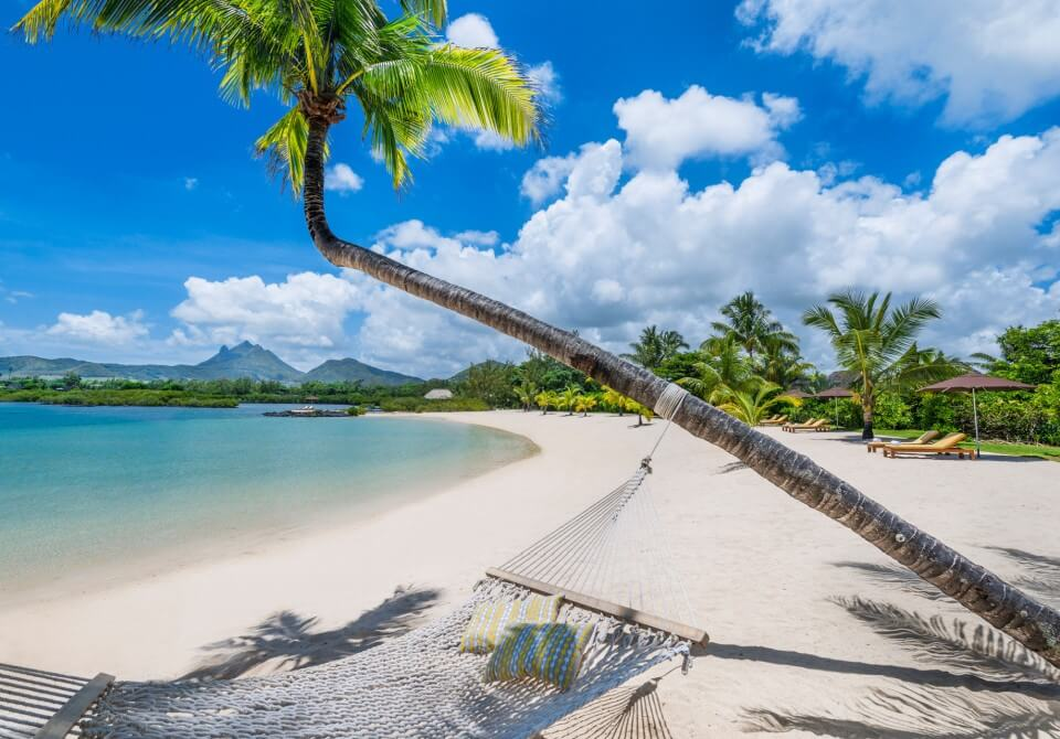 Palma i hamak na plaży